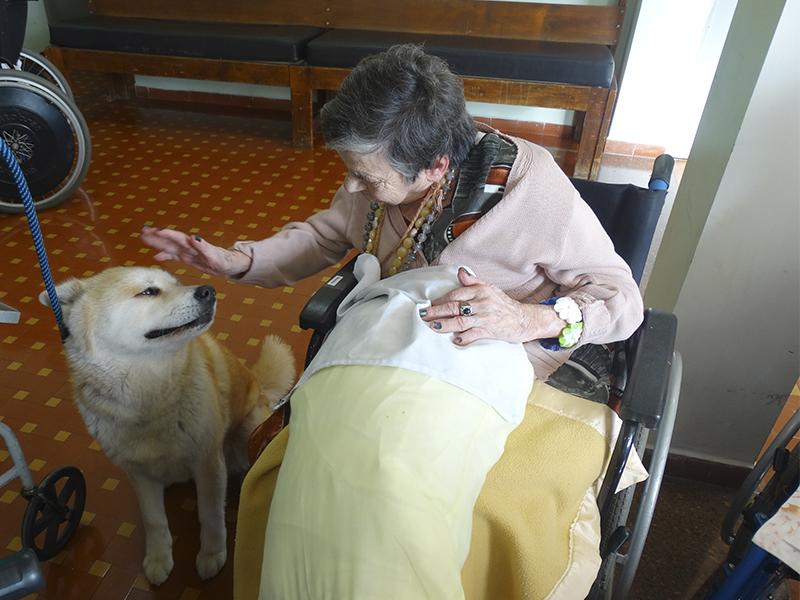 [Cão Terapia]